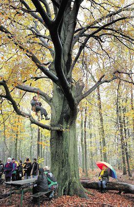 Activisten bezetten bos in Schinveld