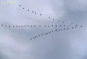 Meer vliegen en toch de planeet redden